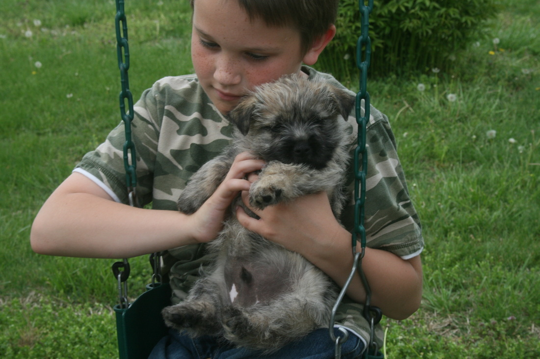 Car-Mir-Jac Cairn Terrier Puppies - Home